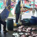 Dampak Covid-19, Nelayan Lamongan Mengeluh Harga Ikan Laut Turun