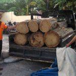 Gerebek Aksi Ilegal Logging, Petugas Gabungan Amankan Belasan Gelondong Kayu Jati