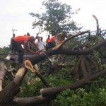 Pohon Bertumbangan di Pasuruan, Hambat Sejumlah Perjalanan KA