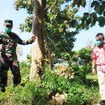 Pemkab Mojokerto Siapkan Permakaman Khusus Covid-19 di Area Hutan Dawarblandong