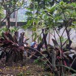 Hasil <em>Rapid Test</em> Negatif, PDP dengan Gangguan Paru-Paru di Kabupaten Mojokerto Meninggal Dunia