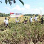 Hadiri Panen di Jombang, Legislator Pusat: Bulog Harus Penuhi Stok 11 Kebutuhan!