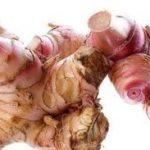 Manfaat Lengkuas Mencegah Penyakit Tumor dan Kanker