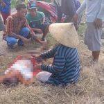 Pamit Mengarit,  Kakek  65 Tahun di Situbondo Ditemukan Tewas di Pinggir Sungai