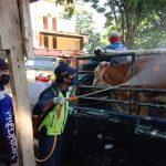 Pasar Hewan di Situbondo Disemprot Disinfektan, Bupati : Kalau Tak Patuh Saya Tutup!