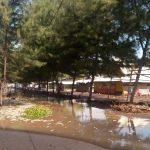 Abrasi di Pantai Tempursari Lumajang Terus Menggerus, Relawan Bencana Kerja Ekstra