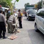Polisi Singkirkan Pohon Pisang yang Ditanam Warga di Jalan Poros Nasional Babat-Lamongan