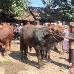 Pasar Hewan Jember Kembali Beroperasi, Pedagang Dari Luar Jember Dilarang Masuk
