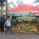 Diyakini Baik untuk Cegah Corona, Permintaan Degan di Lamongan Melonjak