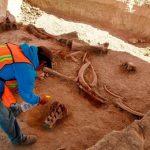Peneliti Temukan 'Kuburan' 60 Mamut di Meksiko