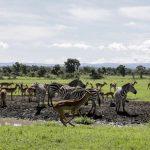 Inovasi Wisata di Masa Pandemi, Kenya Tawarkan Safari Virtual