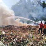 Dua Hektar Tebu di Situbondo Terbakar