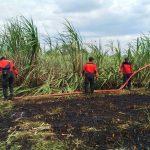 Tujuh Petak Lahan Tebu di Situbondo Terbakar