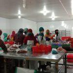 Ikan Patin BPNT Belum Terdistribusi, DPRD Tulungagung: Agen Belum Siap