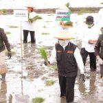Gubernur Jawa Timur Canangkan Percepatan Tanam Padi