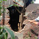 Jebol Tembok Kandang, Tiga Ekor Sapi di Probolinggo Dimaling