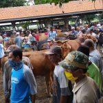 Ditutup Selama Pandemi, Pasar Ternak di Kota Probolinggo Siap Dibuka Lagi