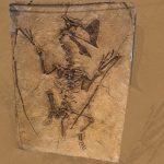 Selain Tiongkok dan Brazil, Fosil Dinosaurus Terbang Juga Ada di Inggris