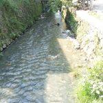 Diduga Tercemar Limbah Pabrik, Sungai di Ngoro Mojokerto Berbau Menyengat