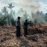 Tiga Hektare Tanaman Tebu Milik Petani Situbondo Ludes Terbakar
