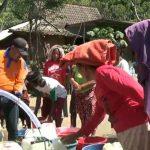 Termasuk Daerah 30 Hari Tanpa Hujan, Situbondo Terancam Kekeringan