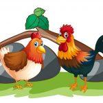 Bolehkah Berkurban Pakai Ayam?