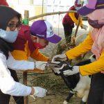 Disnakeswan Lamongan Temukan Sejumlah Hewan Belum Penuhi Syarat untuk Kurban