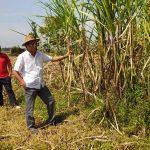 Desakan APTR Disetujui, Pemerintah Wajibkan Importir Beli Semua Gula Petani