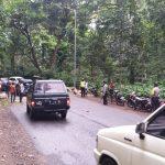 Pohon Tumbang di Jalur Gumitir Jember Akibatkan Satu Pemotor Terluka