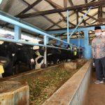 Gubernur Khofifah Optimistis Susu Pasuruan Jadi Pusat Sediaan Makanan Bergizi