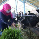 Idul Adha, Pemprov Jatim Minta Masyarakat Terapkan Protokol Kesehatan