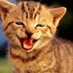 Inilah Bahaya Bulu Kucing, Waspadalah