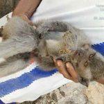 Tersangkut di Tiang Listrik, Evakuasi Seekor Monyet Liar Berlangsung Dramatis