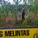 Mayat Penuh Luka di Ladang Jagung Blitar, Diduga Korban Pembunuhan