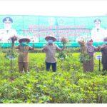 Bersama Distan Provinsi Jatim, Wabup Pamekasan Panen Kacang Tanah