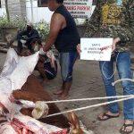 Gubenur DKI Anies Baswedan Sumbang Sapi Kurban ke PP Tebuireng Jombang