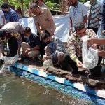 Disulap Jadi Bersih, Sungai di Kota Probolinggo Ditebar Ribuan Ikan Nila