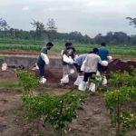 Beredar Video Pemakaman Jenazah Diduga Covid-19 Tanpa APD di Kanigoro Blitar