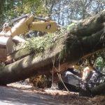 Pohon Besar Tumbang, Akses Malang-Jember di Lereng Gunung Semeru Lumajang Lumpuh