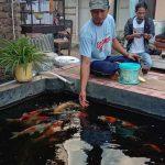 Dulunya Rawa Disulap Jadi Kolam, Kini Jadi Kampung Ikan Koi di Kota Probolinggo