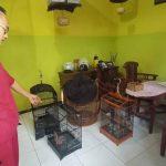 Rumah di Kota Probolinggo Disatroni Maling, Empat Burung Mahal Raib