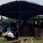 Judi Sabung Ayam di Jombang, Diduga Dibackingi Oknum Polisi