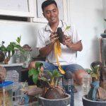 Kreatif, Anggota Polri di Lamongan Sukses Produksi Bonsai Kelapa