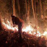 Diduga Akibat Puntung Rokok, Lima Hektar Hutan Jati di Situbondo Terbakar