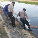 Mayat Perempuan Berkaus Jokowi Mengambang di Anak Sungai Brantas Jombang