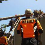 Angin Kencang Robohkan Kelapa di Situbondo, Dua Rumah Rusak