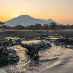 5 Hewan Langka di Taman Nasional Baluran Jawa Timur