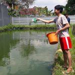 Enam Bulan Pandemi, Harga Ikan Gurami di Tulungagung Kian Anjlok