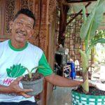 Pisang Kepok Tanjung Ada di Probolinggo, 8 Bulan Bisa Berbuah Tanpa Ontong