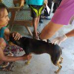 Ratusan Anjing dan Kucing di Jember Disuntik Vaksin, Antisipasi Rabies